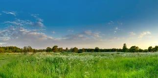 Πράσινο λιβάδι ενάντια στον μπλε ουρανό βραδιού Στοκ εικόνες με δικαίωμα ελεύθερης χρήσης