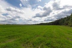 Πράσινο λιβάδι κάτω από το δάσος Στοκ εικόνες με δικαίωμα ελεύθερης χρήσης