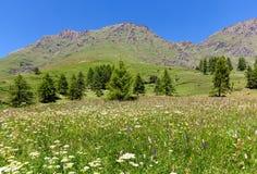 Πράσινο λιβάδι με τα λουλούδια και τα βουνά στο υπόβαθρο στην Ιταλία Στοκ Φωτογραφία