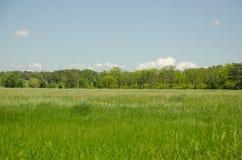 Πράσινο λιβάδι μπροστά από το δάσος στοκ φωτογραφία με δικαίωμα ελεύθερης χρήσης