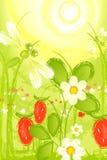πράσινο λιβάδι πεδίων μούρ&omega διανυσματική απεικόνιση