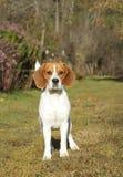πράσινο λιβάδι σκυλιών λα Στοκ εικόνες με δικαίωμα ελεύθερης χρήσης