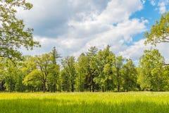 Πράσινο λιβάδι χλόης στο δάσος Στοκ εικόνες με δικαίωμα ελεύθερης χρήσης