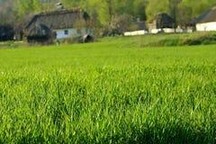 πράσινο λιβάδι χλόης Στοκ Φωτογραφία