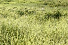 πράσινο λιβάδι Στοκ φωτογραφίες με δικαίωμα ελεύθερης χρήσης