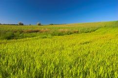 πράσινο λιβάδι Στοκ Φωτογραφίες