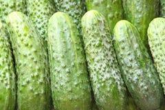 πράσινο μέρος αγγουριών Στοκ Εικόνες