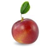 πράσινο μήλου κόκκινο φύλλων Στοκ Εικόνες