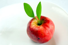 πράσινο μήλου φύλλα Στοκ Φωτογραφίες