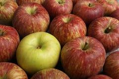 πράσινο μήλου Στοκ εικόνες με δικαίωμα ελεύθερης χρήσης