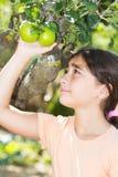 πράσινο μήλου Στοκ φωτογραφίες με δικαίωμα ελεύθερης χρήσης