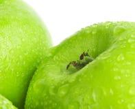 Πράσινο μήλο με τις πτώσεις νερού σε ένα άσπρο υπόβαθρο Στοκ φωτογραφία με δικαίωμα ελεύθερης χρήσης