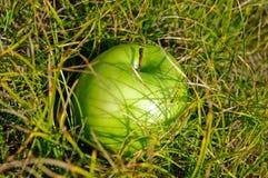 Πράσινο μήλο στη χλόη Στοκ Εικόνες