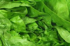 πράσινο μαρούλι Στοκ φωτογραφία με δικαίωμα ελεύθερης χρήσης