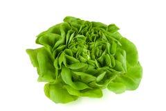 Πράσινο μαρούλι Στοκ Εικόνες