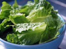 Πράσινο μαρούλι romaine μαρουλιών σαλάτας που τεμαχίζεται Στοκ Εικόνα