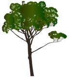 Πράσινο μεγάλο δέντρο πεύκων που απομονώνεται στο λευκό Στοκ φωτογραφίες με δικαίωμα ελεύθερης χρήσης