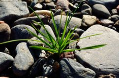 Πράσινο μπάλωμα χλόης Στοκ φωτογραφία με δικαίωμα ελεύθερης χρήσης