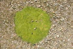 Πράσινο μπάλωμα βρύου στοκ φωτογραφία με δικαίωμα ελεύθερης χρήσης