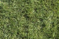 Πράσινο μπάλωμα της χλόης Στοκ εικόνες με δικαίωμα ελεύθερης χρήσης