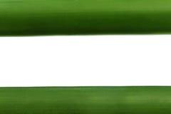 Πράσινο μπαμπού πέρα από το άσπρο υπόβαθρο Στοκ Φωτογραφίες
