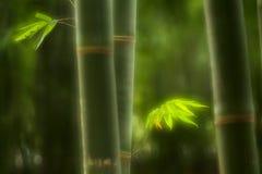 Πράσινο μπαμπού Στοκ φωτογραφία με δικαίωμα ελεύθερης χρήσης