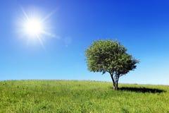 πράσινο μόνο δέντρο πεδίων Στοκ Εικόνες