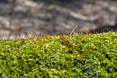 Πράσινο νέο βρύο Στοκ εικόνες με δικαίωμα ελεύθερης χρήσης