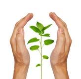 πράσινο να αναπτύξει φυτό Στοκ εικόνα με δικαίωμα ελεύθερης χρήσης