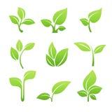 Πράσινο νεαρών βλαστών σύνολο εικονιδίων συμβόλων διανυσματικό Στοκ εικόνες με δικαίωμα ελεύθερης χρήσης