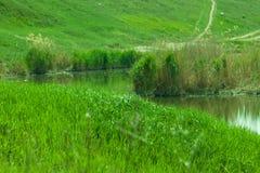 Πράσινο νερό λιβαδιών χλόης Στοκ εικόνα με δικαίωμα ελεύθερης χρήσης