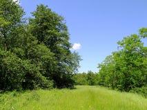 Πράσινο ξέφωτο Στοκ Φωτογραφία