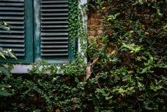 πράσινο ξύλινο louver παράθυρο κοντά στο τουβλότοιχο που καλύπτει με το μεξικάνικο δ στοκ φωτογραφίες