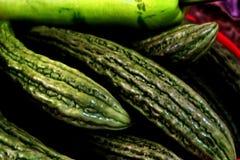 Πράσινο οργανικό πικρό πεπόνι για τις καλές υγείες στοκ φωτογραφία με δικαίωμα ελεύθερης χρήσης