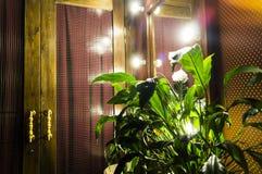Πράσινο λουλούδι σε ένα εκλεκτής ποιότητας δωμάτιο με έναν καθρέφτη και μια πόρτα Στοκ φωτογραφίες με δικαίωμα ελεύθερης χρήσης