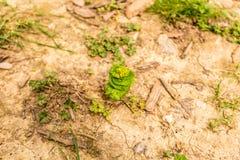 Πράσινο λουλούδι Στοκ φωτογραφίες με δικαίωμα ελεύθερης χρήσης