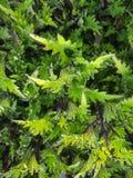 Πράσινο λουλούδι Στοκ Εικόνα