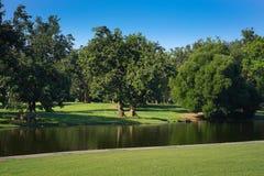 Πράσινο πάρκο πράσινο δέντρο Στοκ Φωτογραφίες