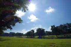 Πράσινο πάρκο πράσινο δέντρο Στοκ Εικόνες