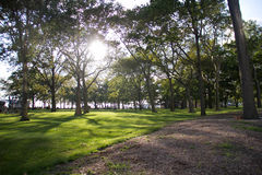 Πράσινο πάρκο με την ηλιοφάνεια Στοκ φωτογραφία με δικαίωμα ελεύθερης χρήσης
