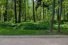 Πράσινο πάρκο πόλεων χορτοταπήτων just rained Στοκ φωτογραφίες με δικαίωμα ελεύθερης χρήσης