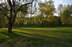Πράσινο πάρκο στην ηλιοφάνεια στοκ φωτογραφία με δικαίωμα ελεύθερης χρήσης