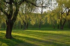 Πράσινο πάρκο στην ηλιοφάνεια στοκ εικόνα