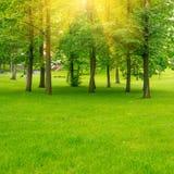 Πράσινο πάρκο Στοκ Εικόνα