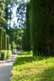 Πράσινο πάρκο Στοκ Εικόνες