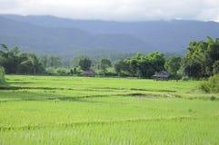 Πράσινο πεδίο ρυζιού ορυζώνα με το λόφο που περιβάλλεται Στοκ Φωτογραφίες