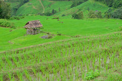 Πράσινο πεδίο ρυζιού στο βουνό (πεδίο ρυζιού εστίασης) Στοκ Φωτογραφίες