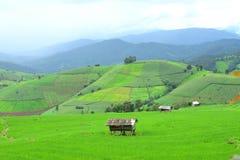 Πράσινο πεδίο ρυζιού στο βουνό Στοκ φωτογραφία με δικαίωμα ελεύθερης χρήσης