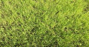 Πράσινο πεδίο χλόης Χλόη, πράσινο υπόβαθρο Φυσική πράσινη σύσταση χλόης, φυσικό πράσινο υπόβαθρο χλόης για το σχέδιο με το διάστη Στοκ Εικόνες