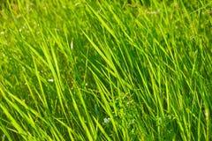 Πράσινο πεδίο χλόης Στοκ Φωτογραφίες